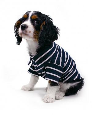 Theo - krekliņš suņiem
