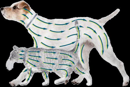 Foresto 1,25 g + 0,56 g pretblusu, pretērču kakla siksna kaķiem un suņiem līdz 8 kg 38cm x 5 gab.