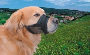 Nobby uzpurnis suņiem 15-20cm (melns)