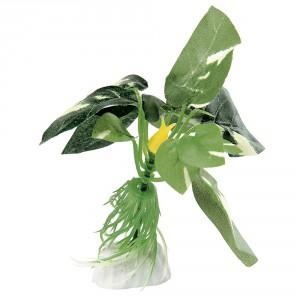 Ferplast zīda augs Anubias