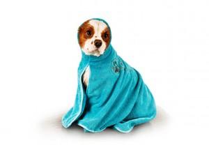 Show Tech+ Dry Dude Turquoise Pet Towel For Dogs And Cats , L - Mikrošķiedru dvielis ar izšuvumiem ar kapuci ,tirkīza krāsā